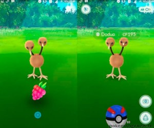 Razz Berry в Pokemon Go