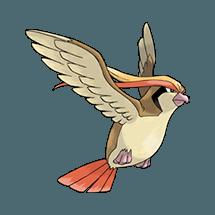 Пиджит (Pidgeot)