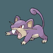 Раттата (Rattata)