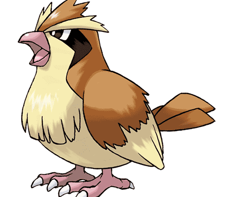 Покемон Пиджи (Pidgey) в Pokemon Go / Покемон Го